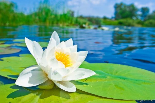 Лилия - чистото, свежо и сладко цвете на парфюмерията