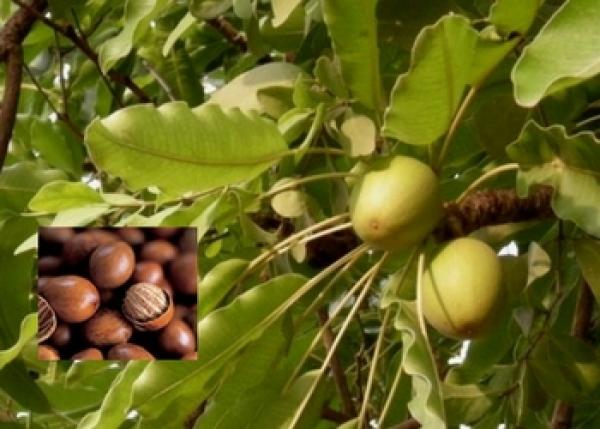 Дървесните нотки – едни от най-ценните в парфюмерията