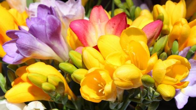 Фрезия - нежен и изискан аромат